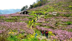 祠堂庄是安徽省肥东县响导乡龚集村的一个自然村,春分时节,这里迎来了一年中最热闹的时光,上了年纪的村民感叹道,