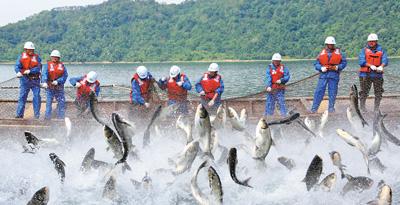 安徽黄山:太平湖渔业产量产值翻倍长